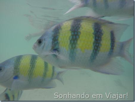 Foto peixes lagoon
