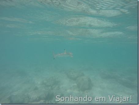 Foto tubarão
